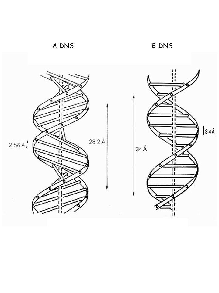 A-DNSB-DNS