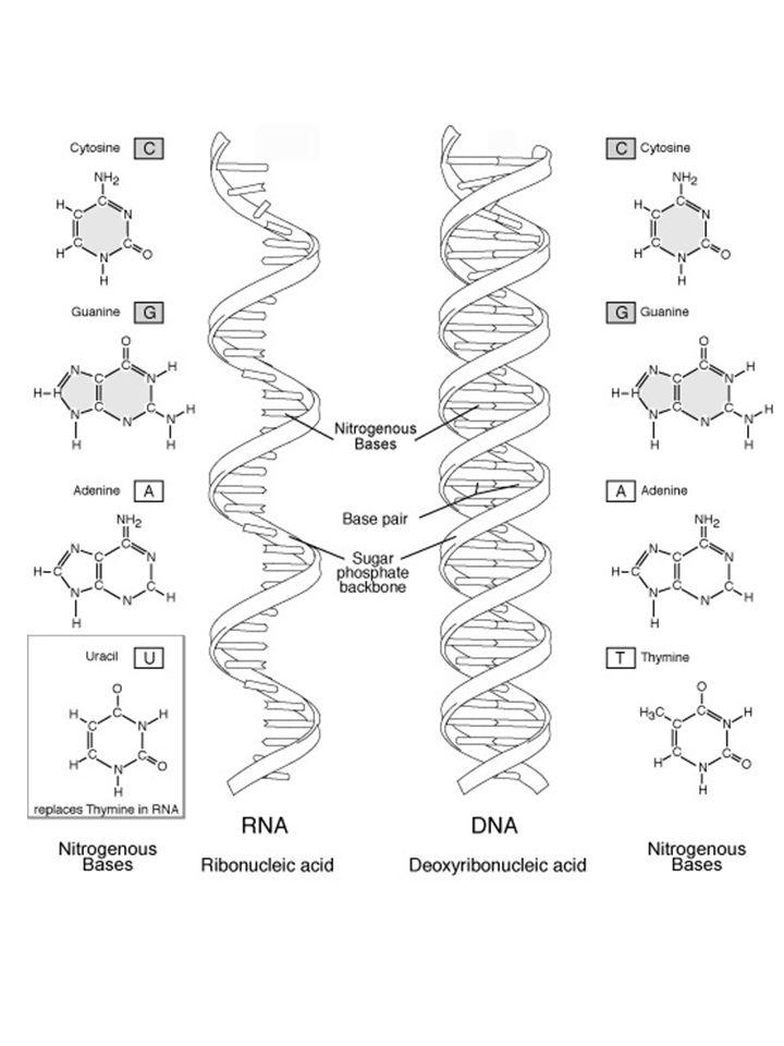 Az RNS
