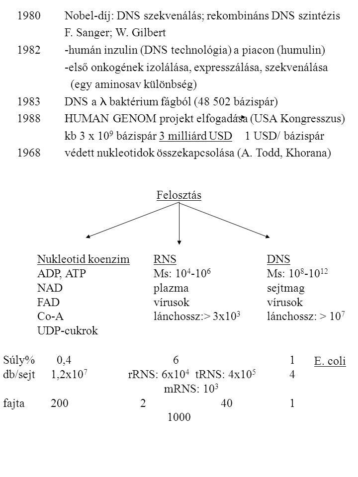 1980Nobel-díj: DNS szekvenálás; rekombináns DNS szintézis F. Sanger; W. Gilbert 1982-humán inzulin (DNS technológia) a piacon (humulin) -első onkogéne