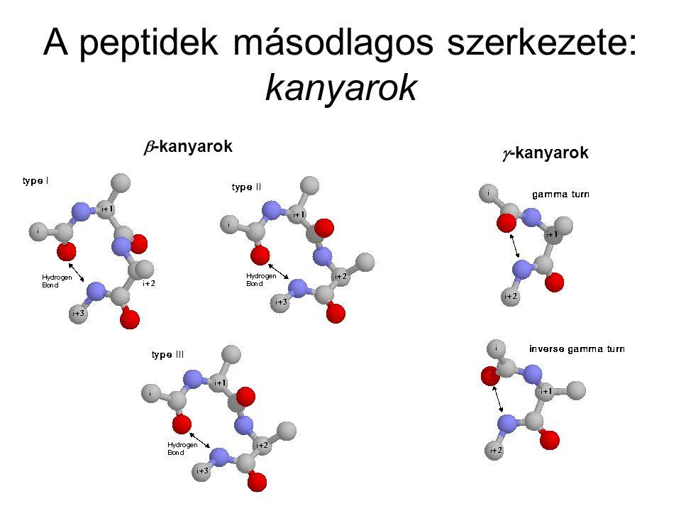 A peptidek másodlagos szerkezete: kanyarok  -kanyarok  -kanyarok