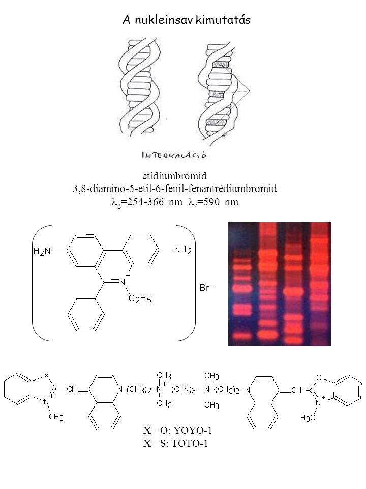 A nukleinsav kimutatás etidiumbromid 3,8-diamino-5-etil-6-fenil-fenantrédiumbromid g =254-366 nm e =590 nm Br - X= O: YOYO-1 X= S: TOTO-1