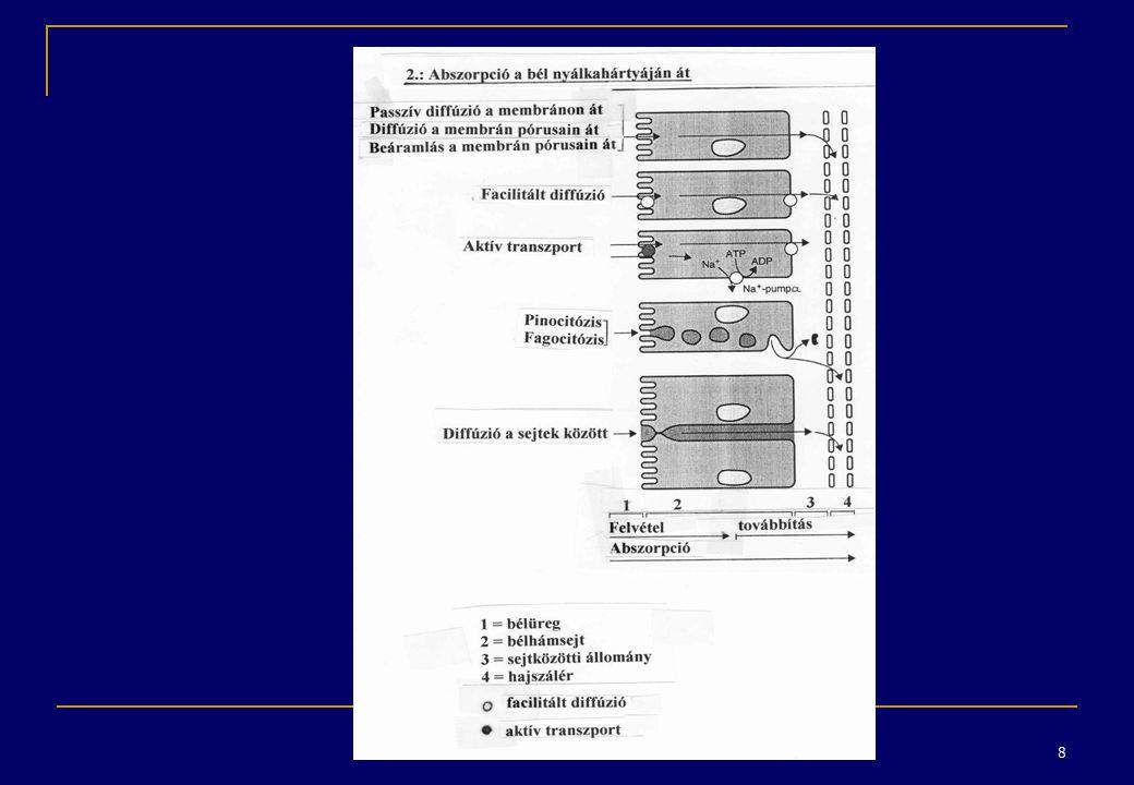 19 A biotranszformáció I.fázisának lehetséges reakciói II.
