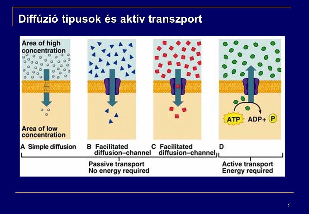 9 Diffúzió típusok és aktív transzport