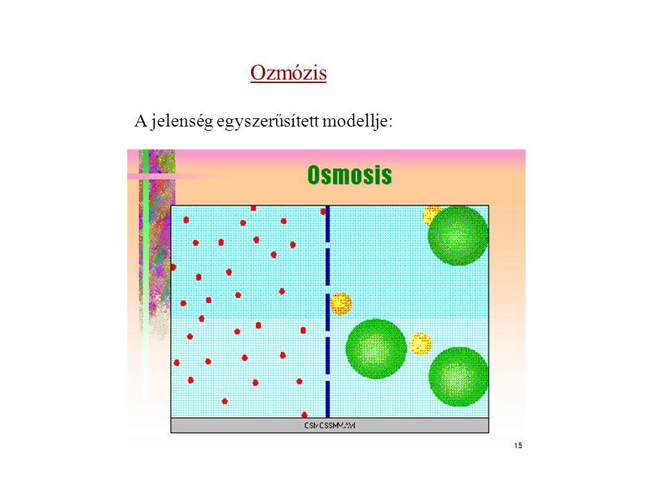 Ozmózis A jelenség egyszerűsített modellje: