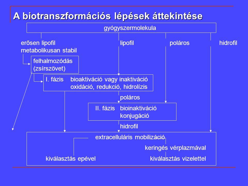gyógyszermolekula erősen lipofillipofilpolároshidrofil metabolikusan stabil felhalmozódás (zsírszövet) I.