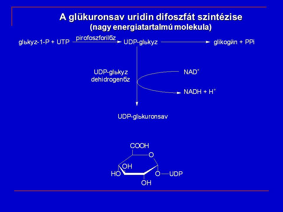 A glükuronsav uridin difoszfát szintézise (nagy energiatartalmú molekula)