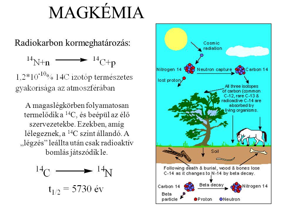 MAGKÉMIA Radiokarbon kormeghatározás: A magaslégkörben folyamatosan termelődik a 14 C, és beépül az élő szervezetekbe. Ezekben, amíg lélegeznek, a 14