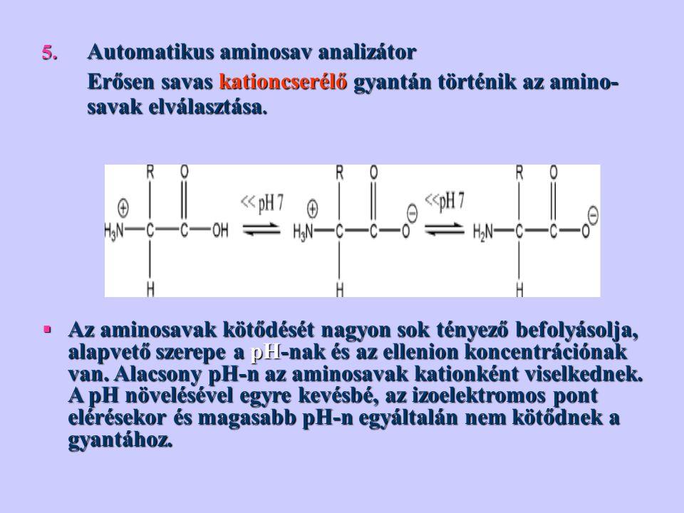 5. Automatikus aminosav analizátor Erősen savas kationcserélő gyantán történik az amino- savak elválasztása. Erősen savas kationcserélő gyantán történ
