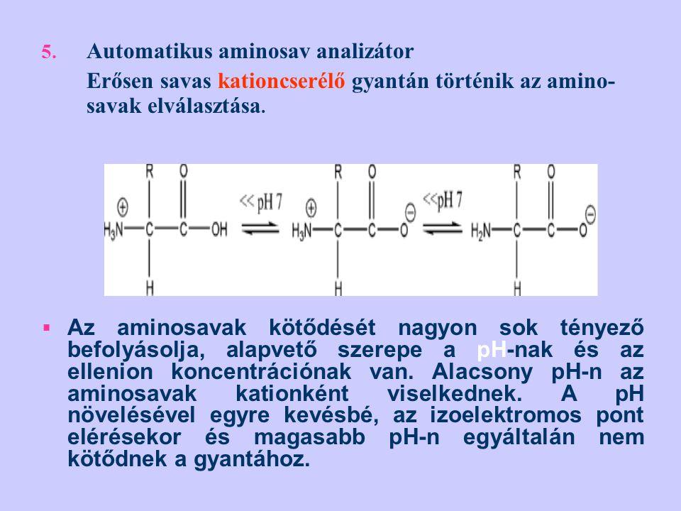 5. Automatikus aminosav analizátor Erősen savas kationcserélő gyantán történik az amino- savak elválasztása.  Az aminosavak kötődését nagyon sok tény