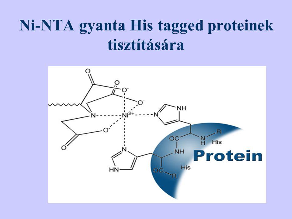 Ni-NTA gyanta His tagged proteinek tisztítására