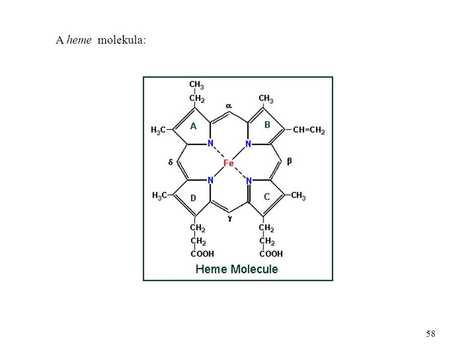 58 A heme molekula: