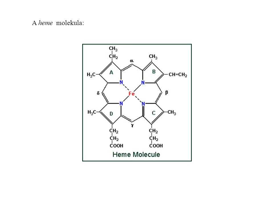 A heme molekula: