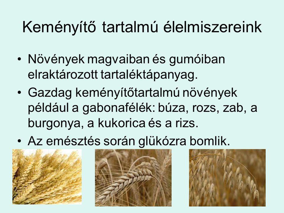 Keményítő tartalmú élelmiszereink Növények magvaiban és gumóiban elraktározott tartaléktápanyag. Gazdag keményítőtartalmú növények például a gabonafél
