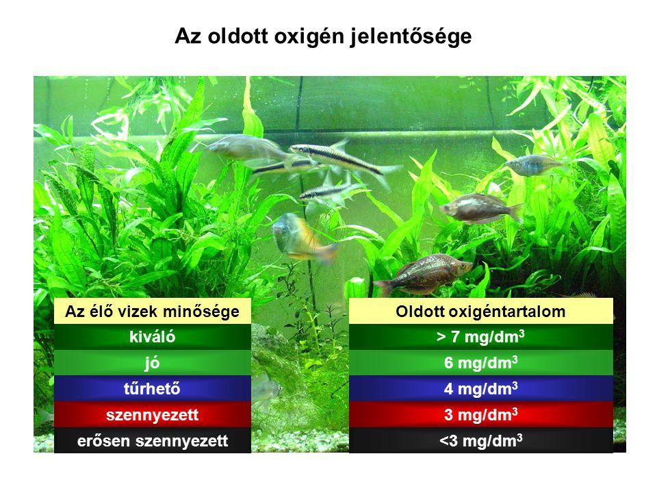 Az oldott oxigén jelentősége Az élő vizek minőségeOldott oxigéntartalom kiváló> 7 mg/dm 3 jó6 mg/dm 3 tűrhető4 mg/dm 3 szennyezett3 mg/dm 3 erősen sze