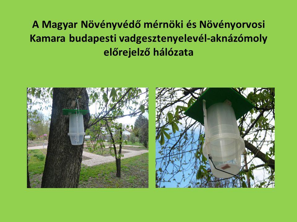 A Magyar Növényvédő mérnöki és Növényorvosi Kamara budapesti vadgesztenyelevél-aknázómoly előrejelző hálózata