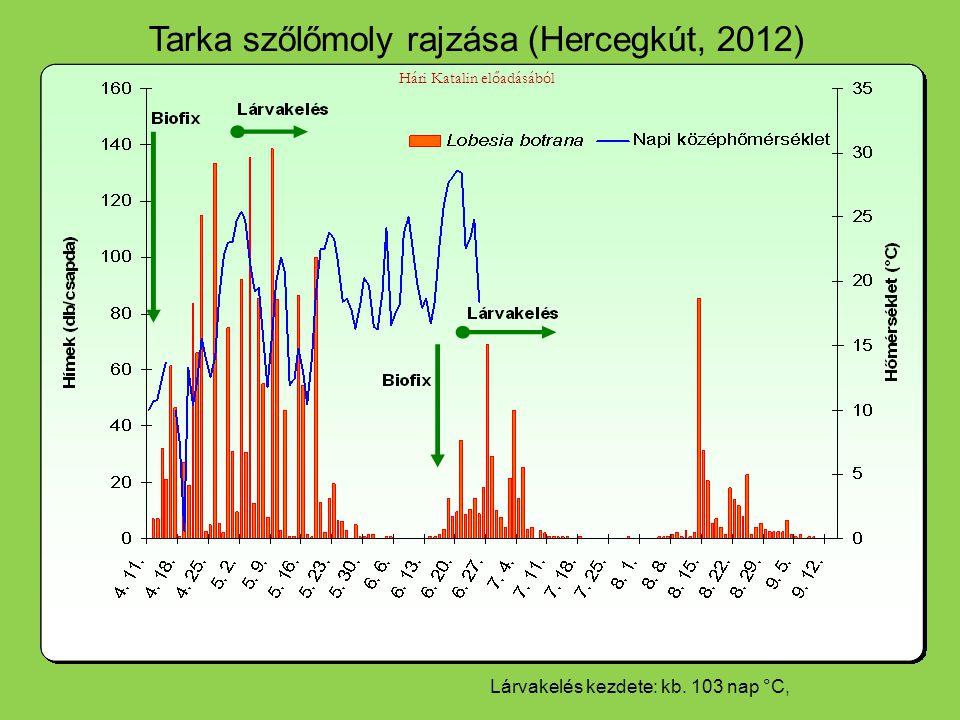 Tarka szőlőmoly rajzása (Hercegkút, 2012) Hári Katalin előadásából Lárvakelés kezdete: kb.