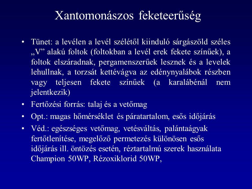 """Xantomonászos feketeerűség Tünet: a levélen a levél szélétől kiinduló sárgászöld széles """"V"""" alakú foltok (foltokban a levél erek fekete színűek), a fo"""