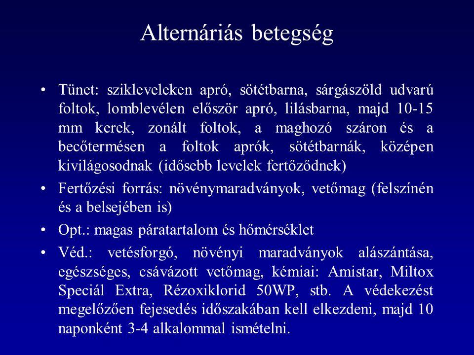 Alternáriás betegség Tünet: szikleveleken apró, sötétbarna, sárgászöld udvarú foltok, lomblevélen először apró, lilásbarna, majd 10-15 mm kerek, zonál