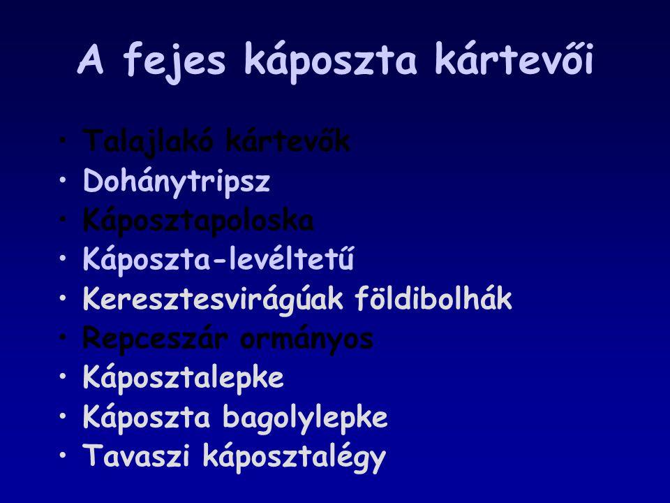 A fejes káposzta kártevői Talajlakó kártevők Dohánytripsz Káposztapoloska Káposzta-levéltetű Keresztesvirágúak földibolhák Repceszár ormányos Káposzta