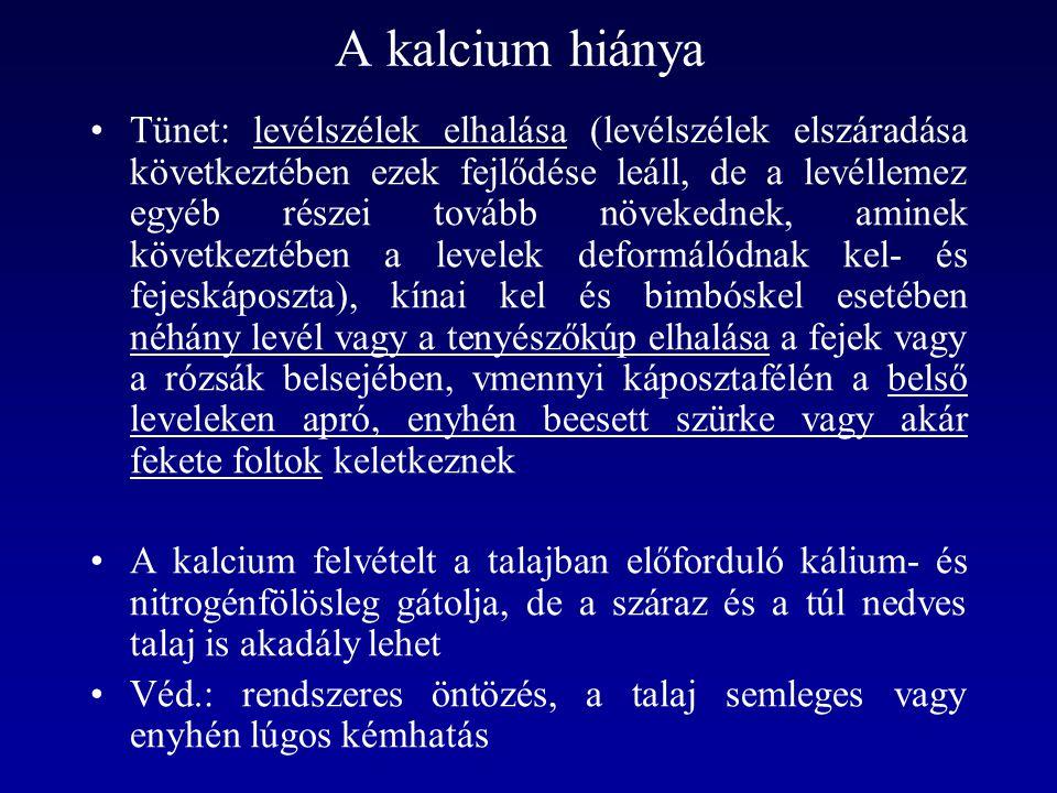 A kalcium hiánya Tünet: levélszélek elhalása (levélszélek elszáradása következtében ezek fejlődése leáll, de a levéllemez egyéb részei tovább növekedn