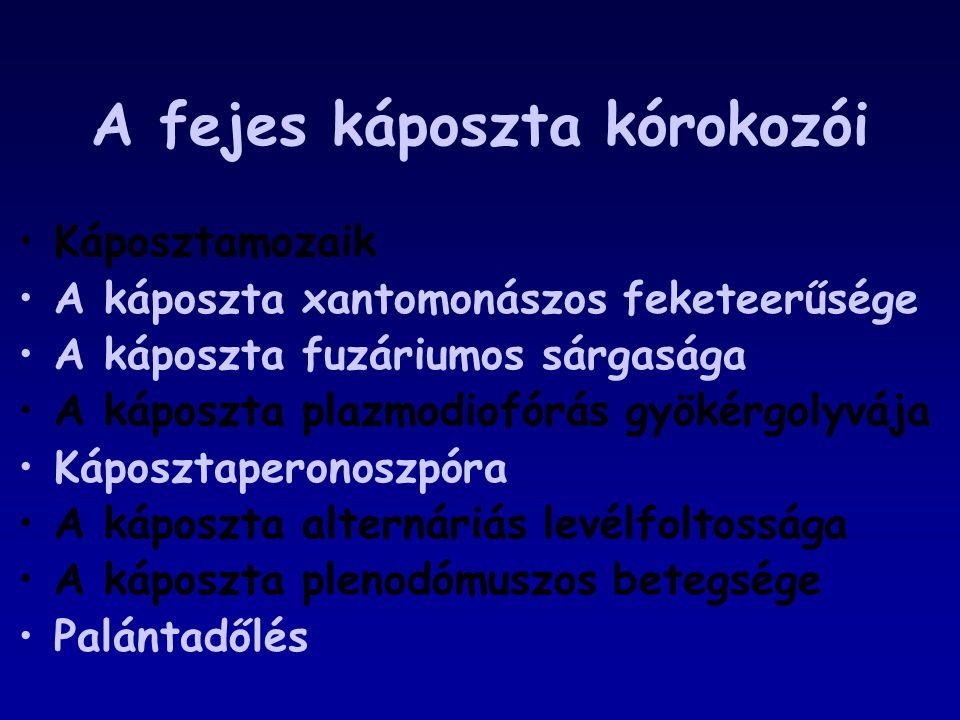 A fejes káposzta kórokozói Káposztamozaik A káposzta xantomonászos feketeerűsége A káposzta fuzáriumos sárgasága A káposzta plazmodiofórás gyökérgolyv