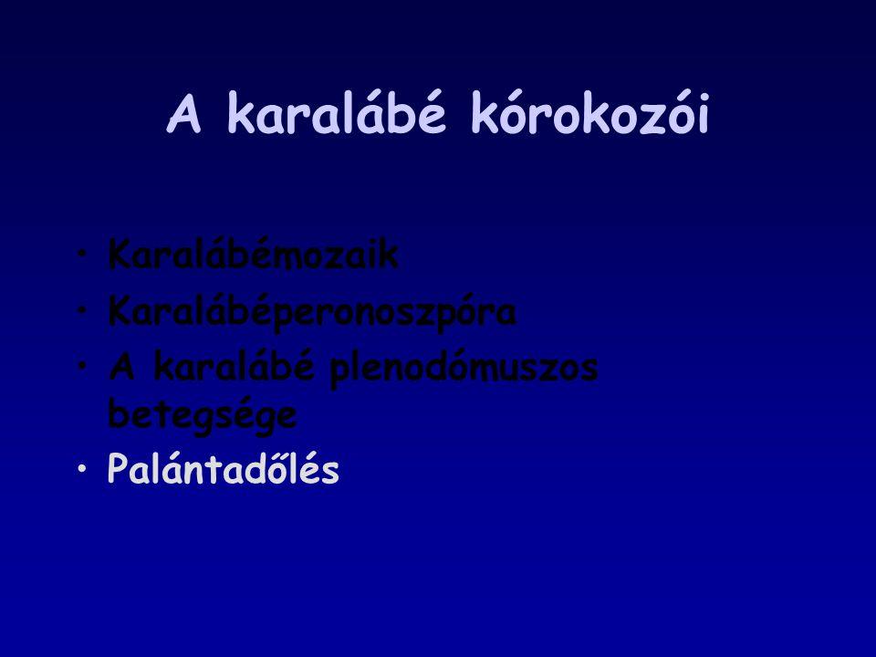 A karalábé kórokozói Karalábémozaik Karalábéperonoszpóra A karalábé plenodómuszos betegsége Palántadőlés