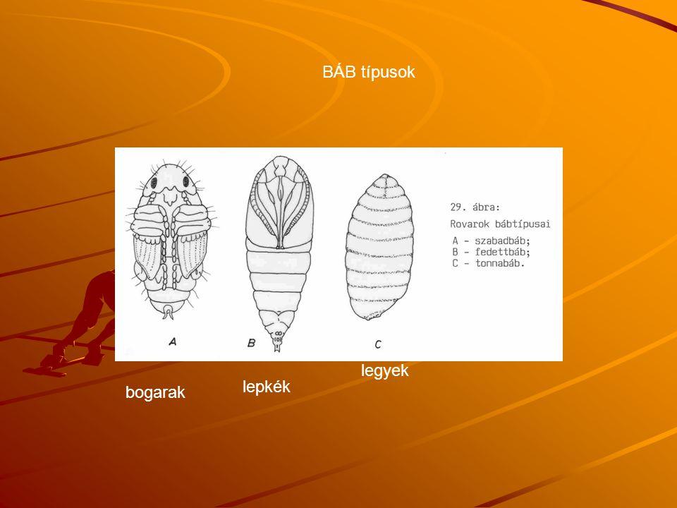 BÁB típusok lepkék legyek bogarak