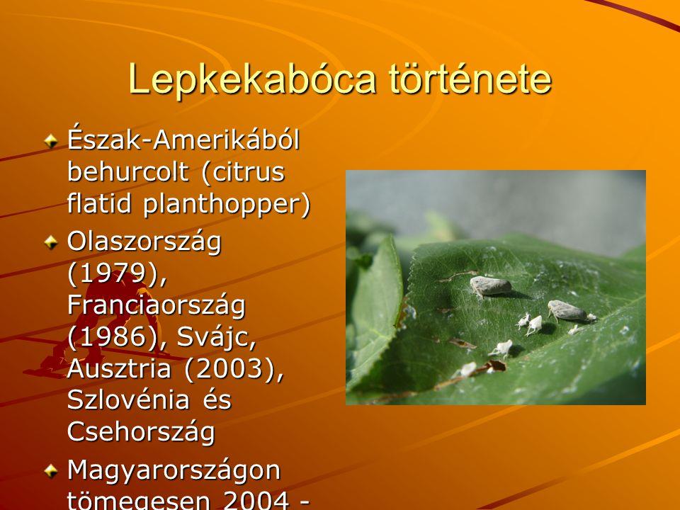 Lepkekabóca története Észak-Amerikából behurcolt (citrus flatid planthopper) Olaszország (1979), Franciaország (1986), Svájc, Ausztria (2003), Szlovénia és Csehország Magyarországon tömegesen 2004 - ben (Orosz András, Jenser Gábor)