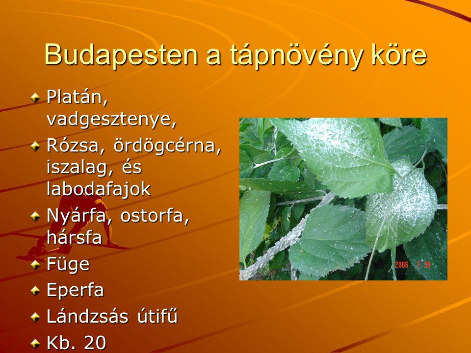 Budapesten a tápnövény köre Platán, vadgesztenye, Rózsa, ördögcérna, iszalag, és labodafajok Nyárfa, ostorfa, hársfa FügeEperfa Lándzsás útifű Kb.