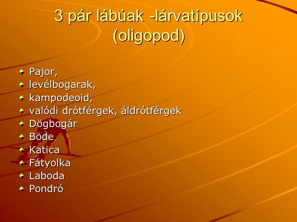 3 pár lábúak -lárvatípusok (oligopod) Pajor,levélbogarak,kampodeoid, valódi drótférgek, áldrótférgek DögbogárBödeKaticaFátyolkaLabodaPondró