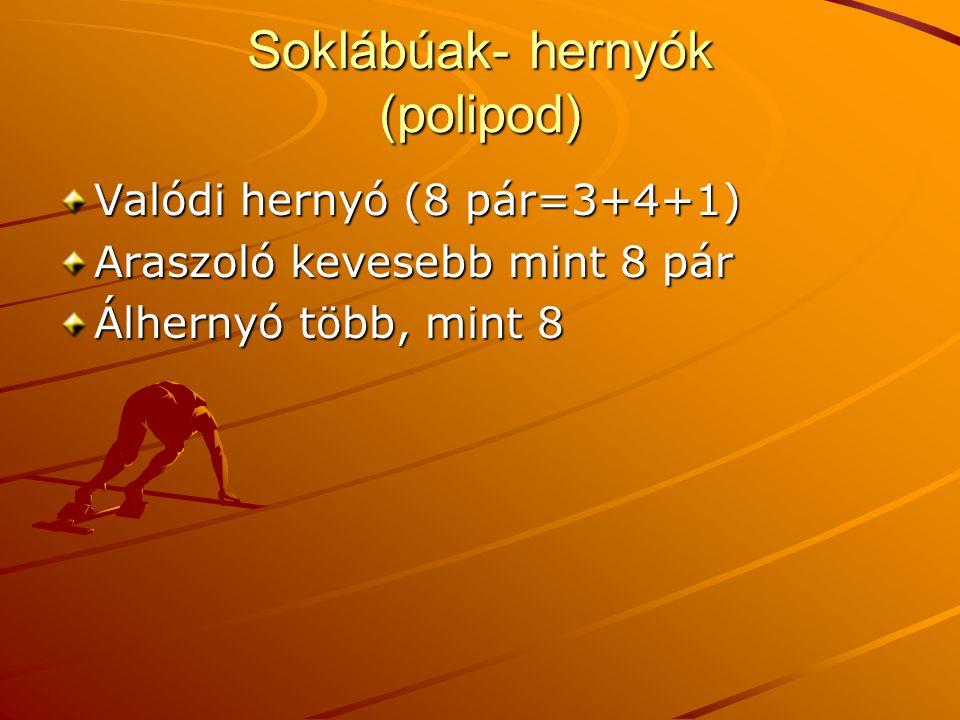 Soklábúak- hernyók (polipod) Valódi hernyó (8 pár=3+4+1) Araszoló kevesebb mint 8 pár Álhernyó több, mint 8