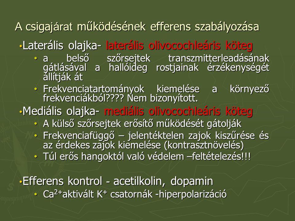 A csiga járat működésének efferens szabályozása Laterális olajka- laterális olivocochleáris köteg Laterális olajka- laterális olivocochleáris köteg a belső szőrsejtek transzmitterleadásának gátlásával a hallóideg rostjainak érzékenységét állítják át a belső szőrsejtek transzmitterleadásának gátlásával a hallóideg rostjainak érzékenységét állítják át Frekvenciatartományok kiemelése a környező frekvenciákból???.
