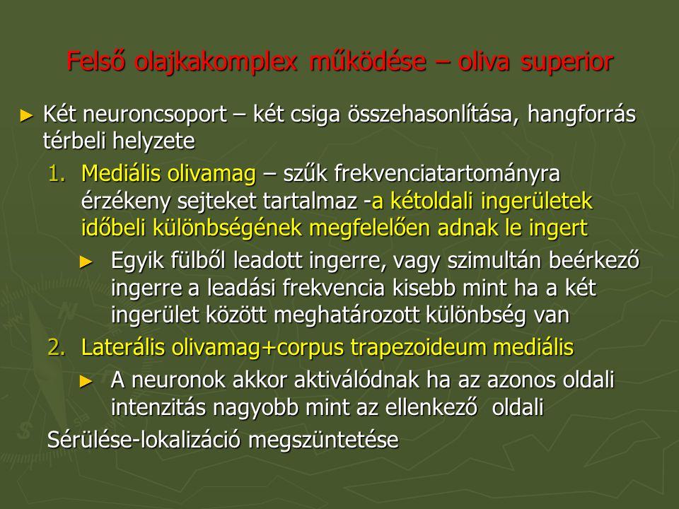 Felső olajkakomplex működése – oliva superior ► Két neuroncsoport – két csiga összehasonlítása, hangforrás térbeli helyzete 1.Mediális olivamag – szűk frekvenciatartományra érzékeny sejteket tartalmaz -a kétoldali ingerületek időbeli különbségének megfelelően adnak le ingert ► Egyik fülből leadott ingerre, vagy szimultán beérkező ingerre a leadási frekvencia kisebb mint ha a két ingerület között meghatározott különbség van 2.Laterális olivamag+corpus trapezoideum mediális ► A neuronok akkor aktiválódnak ha az azonos oldali intenzitás nagyobb mint az ellenkező oldali Sérülése-lokalizáció megszüntetése