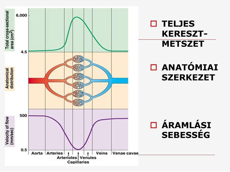  TELJES KERESZT- METSZET  ANATÓMIAI SZERKEZET  ÁRAMLÁSI SEBESSÉG