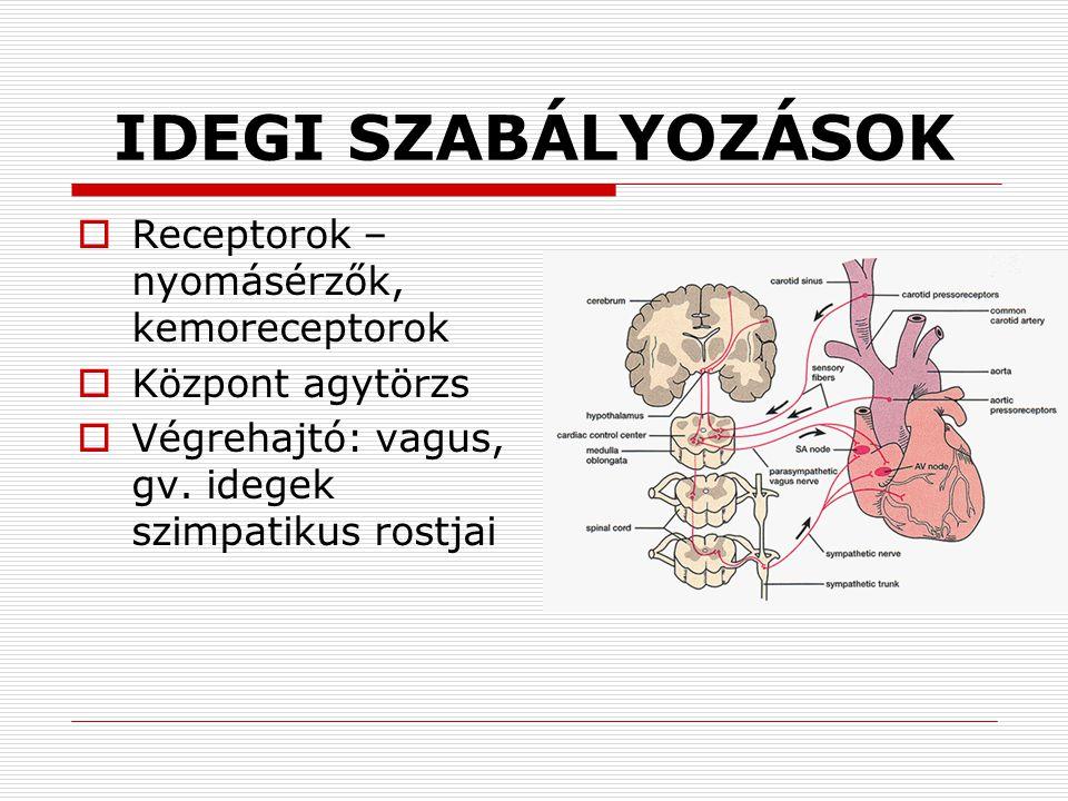 IDEGI SZABÁLYOZÁSOK  Receptorok – nyomásérzők, kemoreceptorok  Központ agytörzs  Végrehajtó: vagus, gv. idegek szimpatikus rostjai