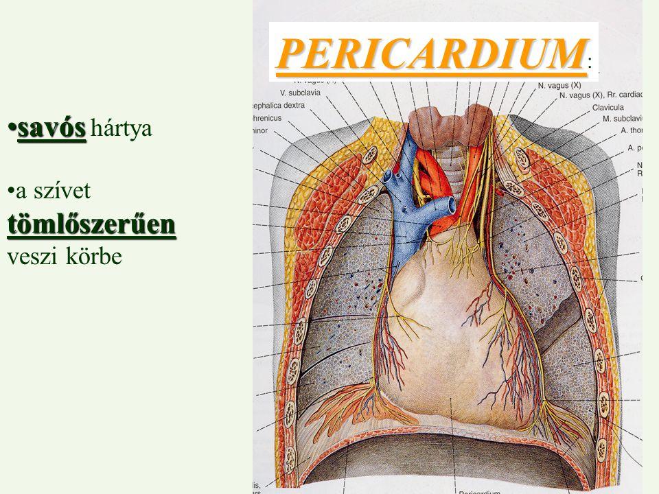 savóssavós hártya tömlőszerűena szívet tömlőszerűen veszi körbe PERICARDIUM PERICARDIUM :
