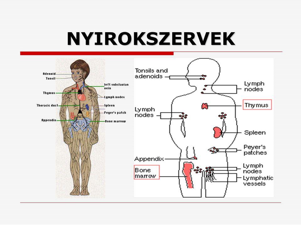 NYIROKSZERVEK