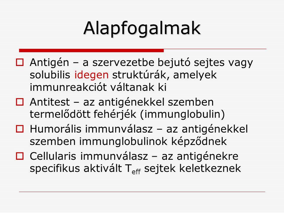 Alapfogalmak  Antigén – a szervezetbe bejutó sejtes vagy solubilis idegen struktúrák, amelyek immunreakciót váltanak ki  Antitest – az antigénekkel