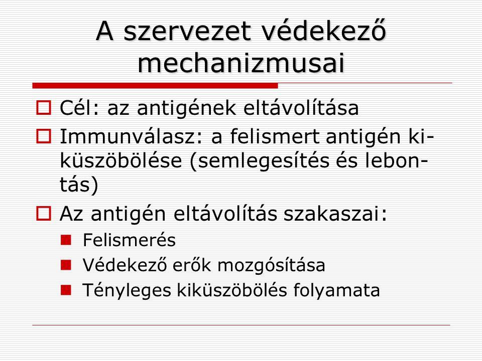 A szervezet védekező mechanizmusai  Cél: az antigének eltávolítása  Immunválasz: a felismert antigén ki- küszöbölése (semlegesítés és lebon- tás) 