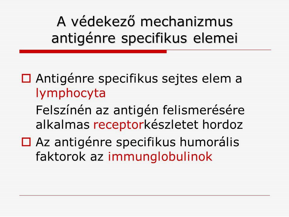 A védekező mechanizmus antigénrespecifikus elemei A védekező mechanizmus antigénre specifikus elemei  Antigénre specifikus sejtes elem a lymphocyta F