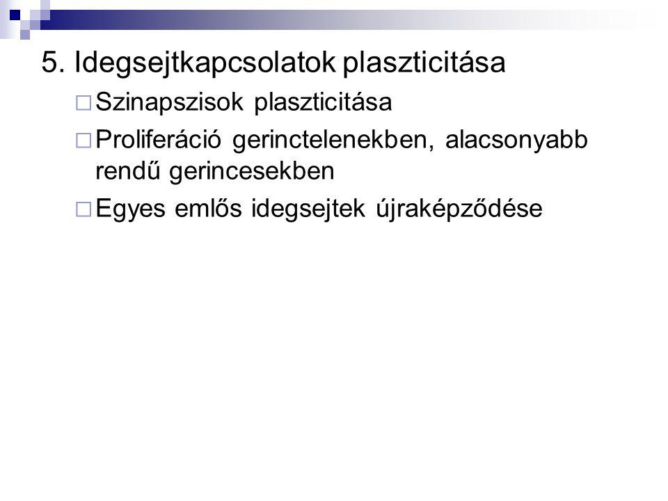 5. Idegsejtkapcsolatok plaszticitása  Szinapszisok plaszticitása  Proliferáció gerinctelenekben, alacsonyabb rendű gerincesekben  Egyes emlős idegs