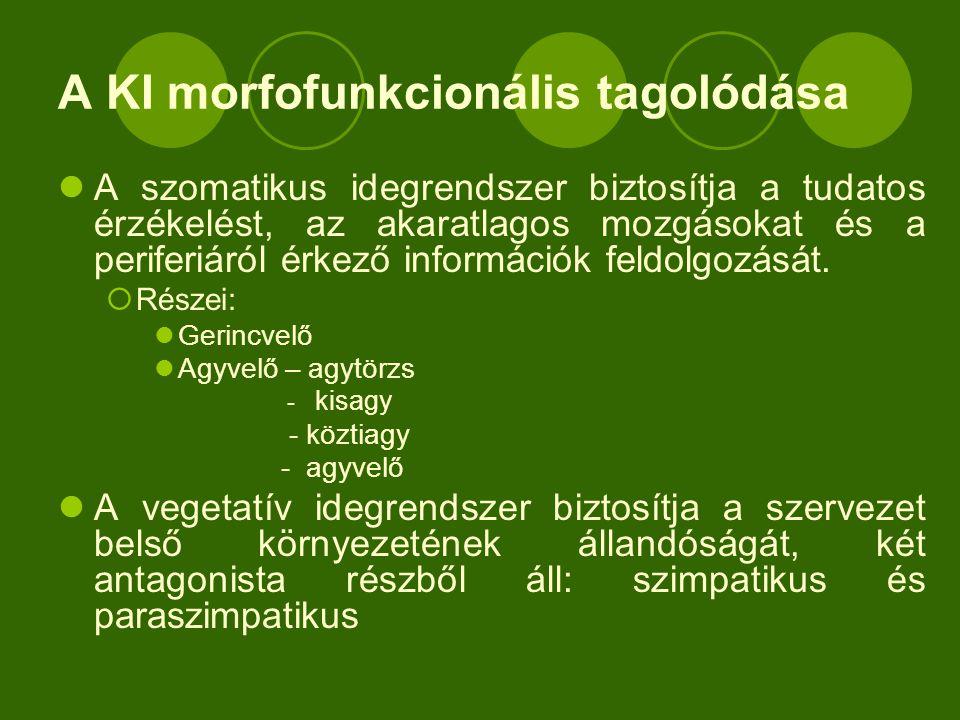Vegetatív reflexív  Receptor- belső szervek falában  Afferens szár – gerincvelői idegek vegetatív rostjai  Központ (gv.