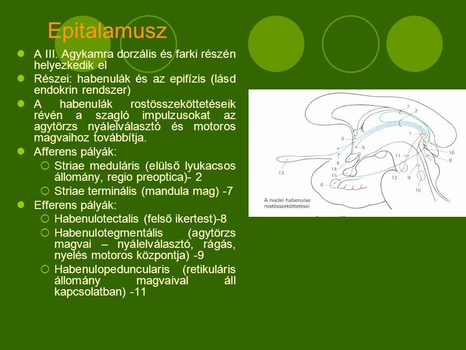 Epitalamusz A III.