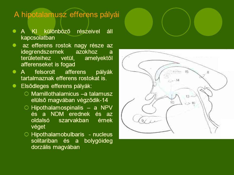 A hipotalamusz efferens pályái A KI különböző részeivel áll kapcsolatban az efferens rostok nagy része az idegrendszernek azokhoz a területeihez vetül, amelyektől afferenseket is fogad A felsorolt afferens pályák tartalmaznak efferens rostokat is.