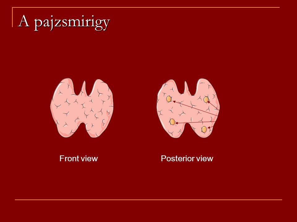 A pajzsmirigy parathyroids Front viewPosterior view