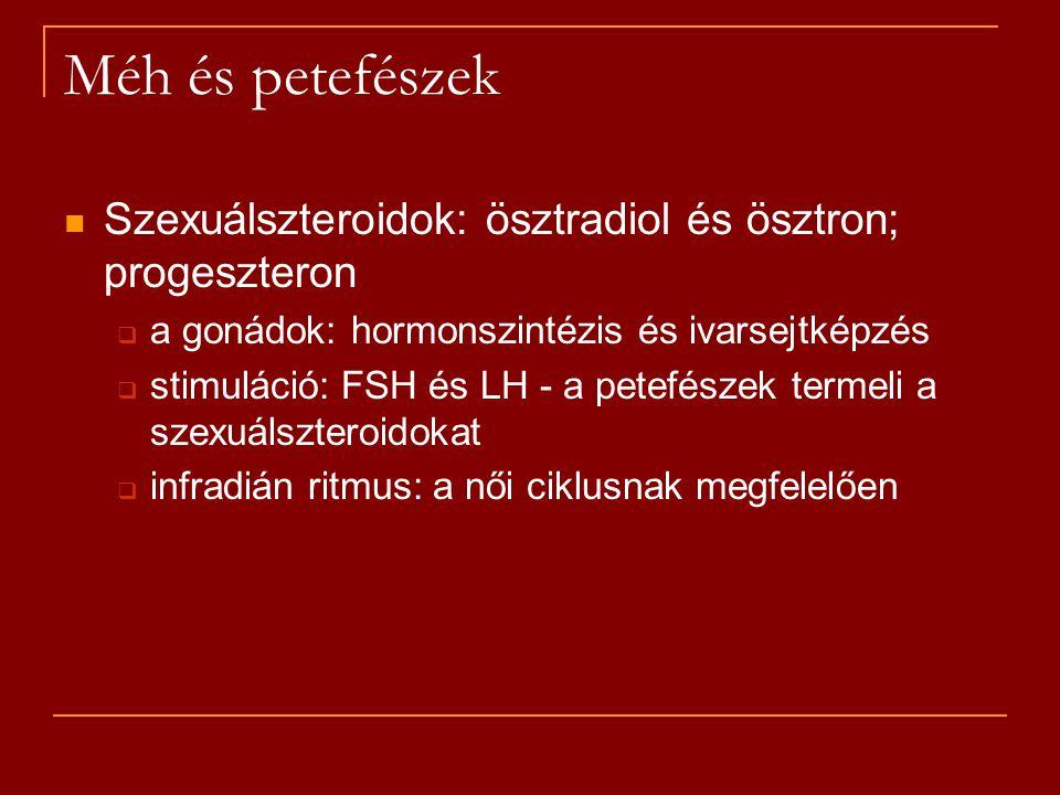 Szexuálszteroidok: ösztradiol és ösztron; progeszteron  a gonádok: hormonszintézis és ivarsejtképzés  stimuláció: FSH és LH - a petefészek termeli a