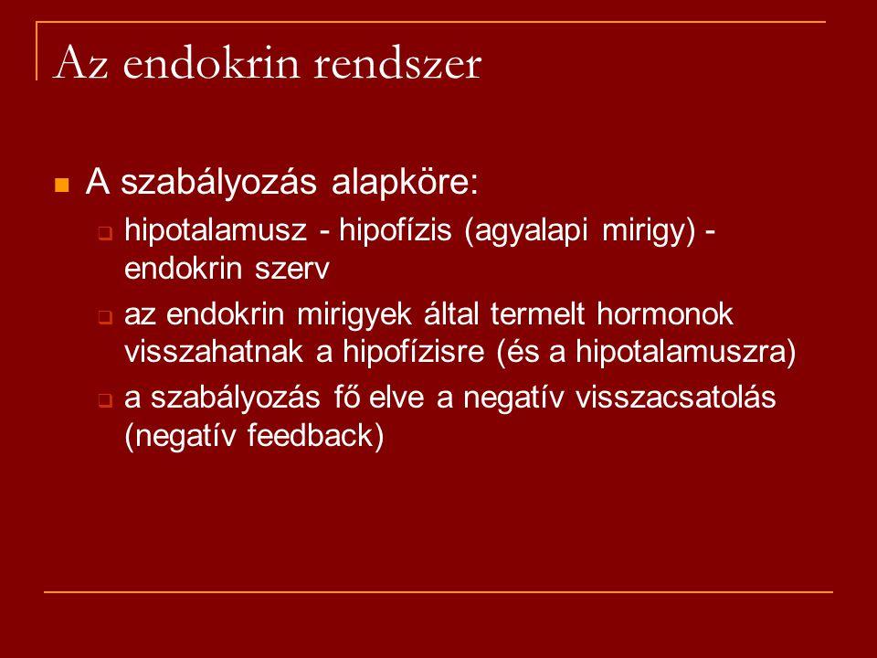 Az endokrin rendszer A szabályozás alapköre:  hipotalamusz - hipofízis (agyalapi mirigy) - endokrin szerv  az endokrin mirigyek által termelt hormon