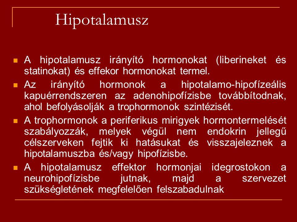 Hipotalamusz A hipotalamusz irányító hormonokat (liberineket és statinokat) és effekor hormonokat termel. Az irányító hormonok a hipotalamo-hipofízeál
