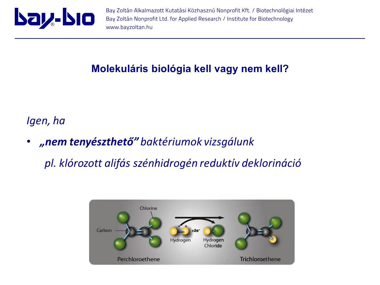 """Molekuláris biológia kell vagy nem kell. Igen, ha """"nem tenyészthető baktériumok vizsgálunk pl."""