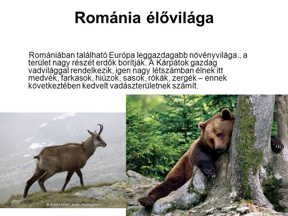 Románia élővilága Romániában található Európa leggazdagabb növényvilága., a terület nagy részét erdők borítják. A Kárpátok gazdag vadvilággal rendelke